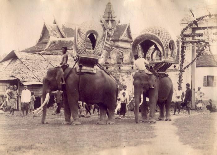 11a elephants Norodom